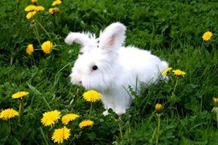 Zielnik królików i gryzoni