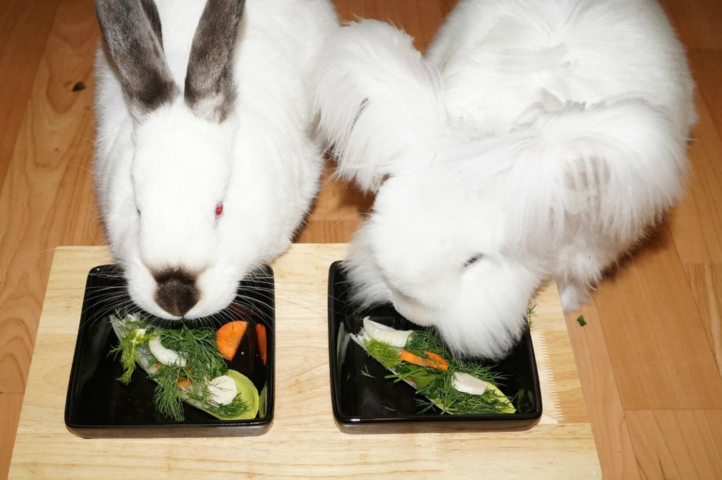 Lista warzyw dozwolonych w żywieniu królików