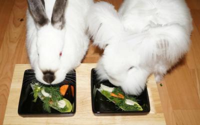 Żywienie królików