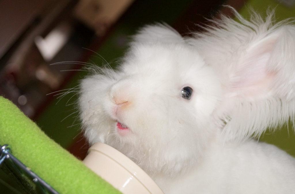 Nasiona dozwolone w diecie królików