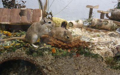 Myszoskoczki- Bójka i Brawurka