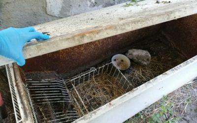 Połamane króliki z lodówki