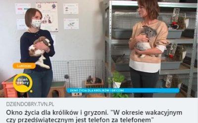 Okienko w Dzień Dobry TVN
